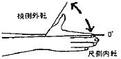 母指の橈側回転の参考図