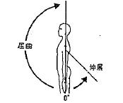 肩の屈曲/伸展の参考図