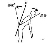 胸腰部の屈曲(前屈)の参考図