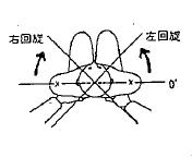 胸腰部の回旋の参考図