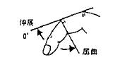 指の屈曲(PIP)/伸展(PIP)の参考図